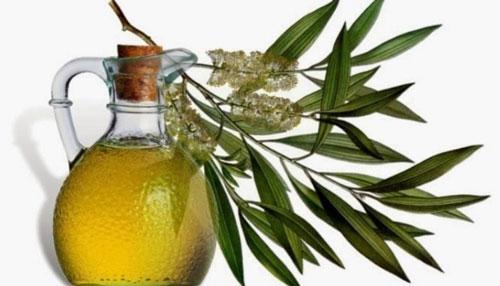 cara mengurangi keringat berlebih minyak pohon teh